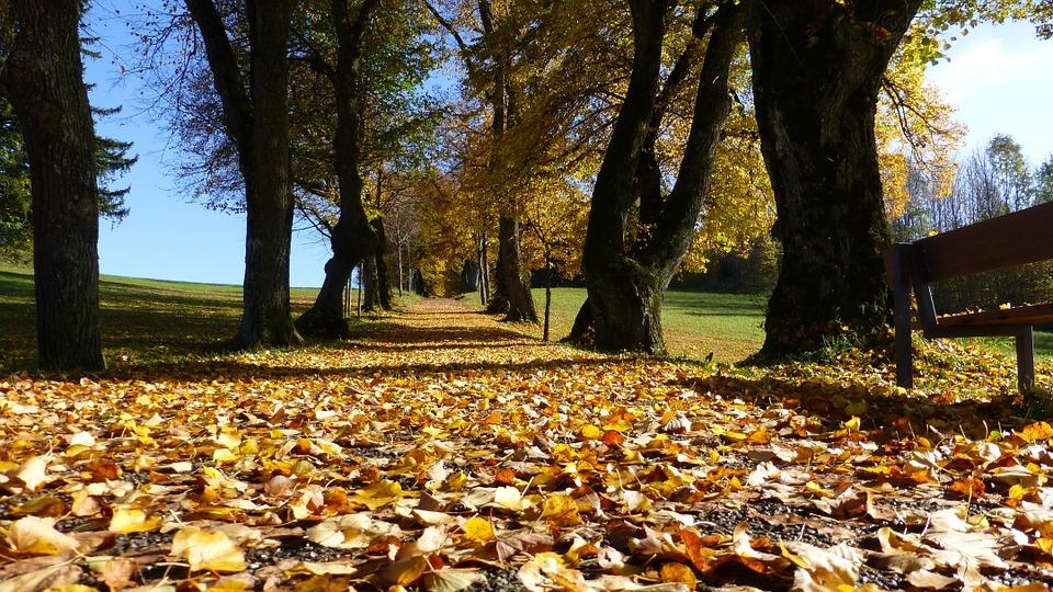 autumntreepath - Snap autumnal colour in Burnham Beeches. [ATTDT]