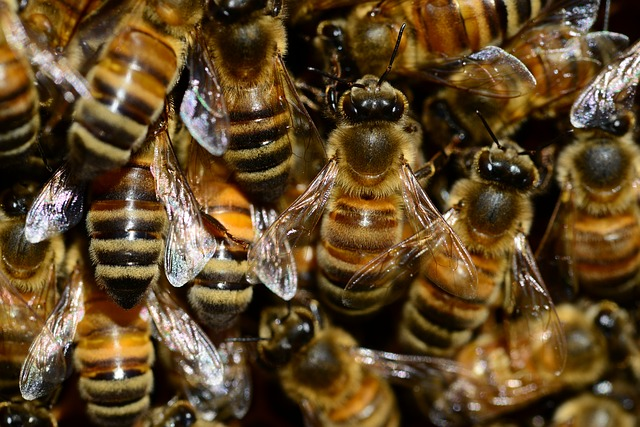 bees - Buzz around bees in South Molton. [ATTDT]