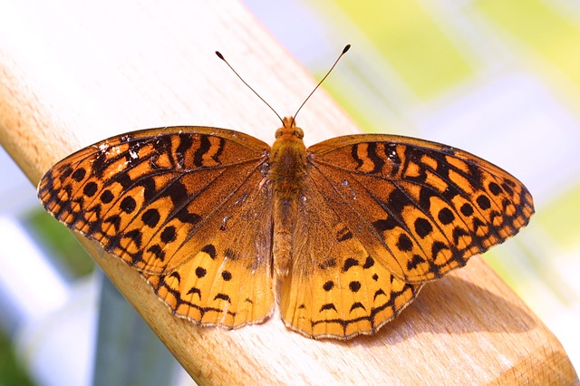 butterfly - Bask in butterflies in the Botanic Gardens. [A Thing To Do Tomorrow]