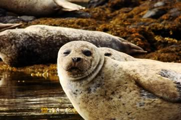 californiasealion - Discover Edmonton's sea lions. [ATTDT]