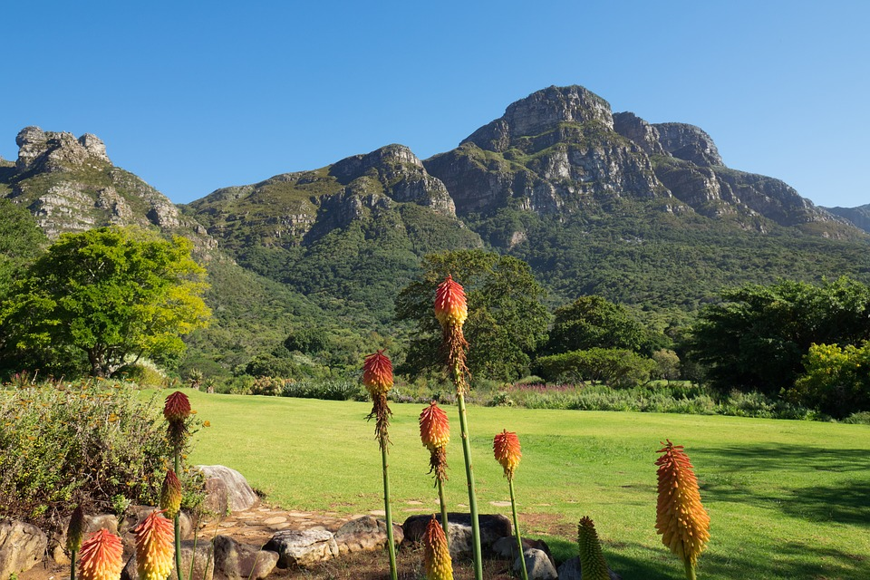 capetownkirstenbosch - Discover South Africa's plant life at Kirstenbosch. [ATTDT]