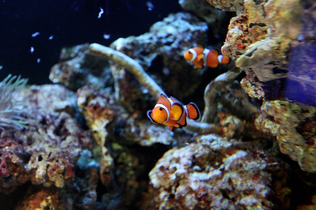 clownfish - Be mesmerised by fish at the Belle Isle Aquarium. [ATTDT]