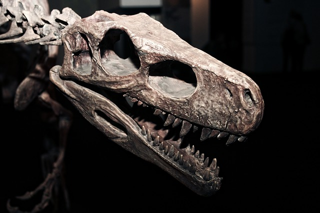 dinosaurskull - Discover the dinosaurs at the Redpath. [ATTDT]