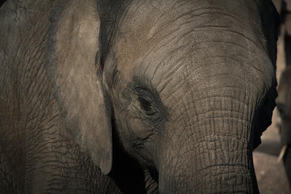 elephant - Meet Auckland's elephants. [ATTDT]