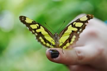 fingerbutterfly - Be among butterflies at Cumberland House. [ATTDT]