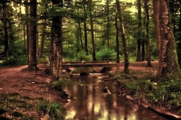 forestbridge - Tiptoe across the treetops at the National Arboretum. [ATTDT]