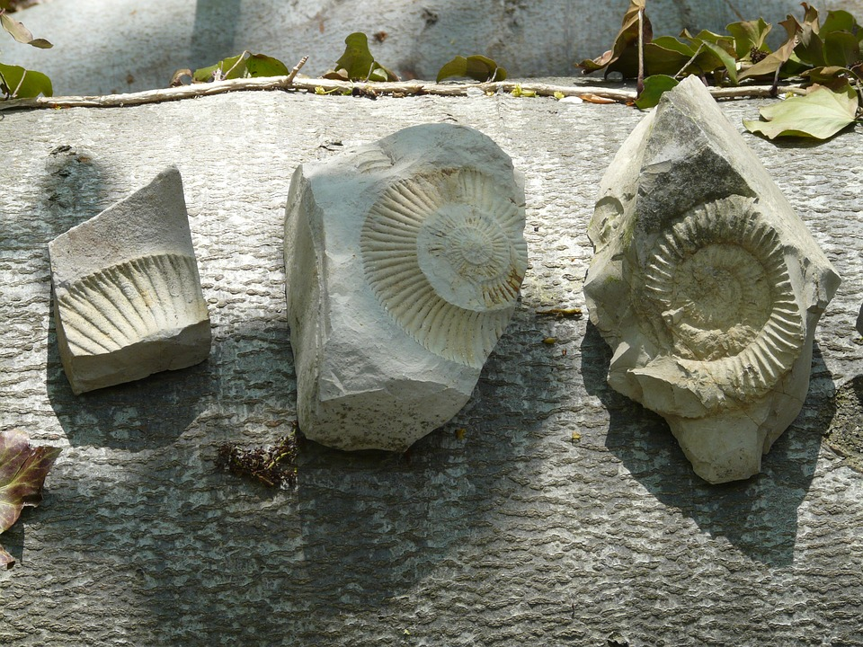 fossils - Discover the rocky history of the planet. [ATTDT]