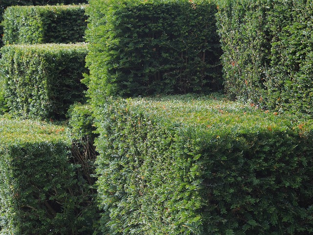 hedge - Lose yourself in London's largest maze. [ATTDT]