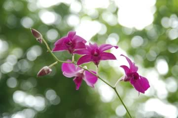 orchid - Have a botanical lunch. [ATTDT]