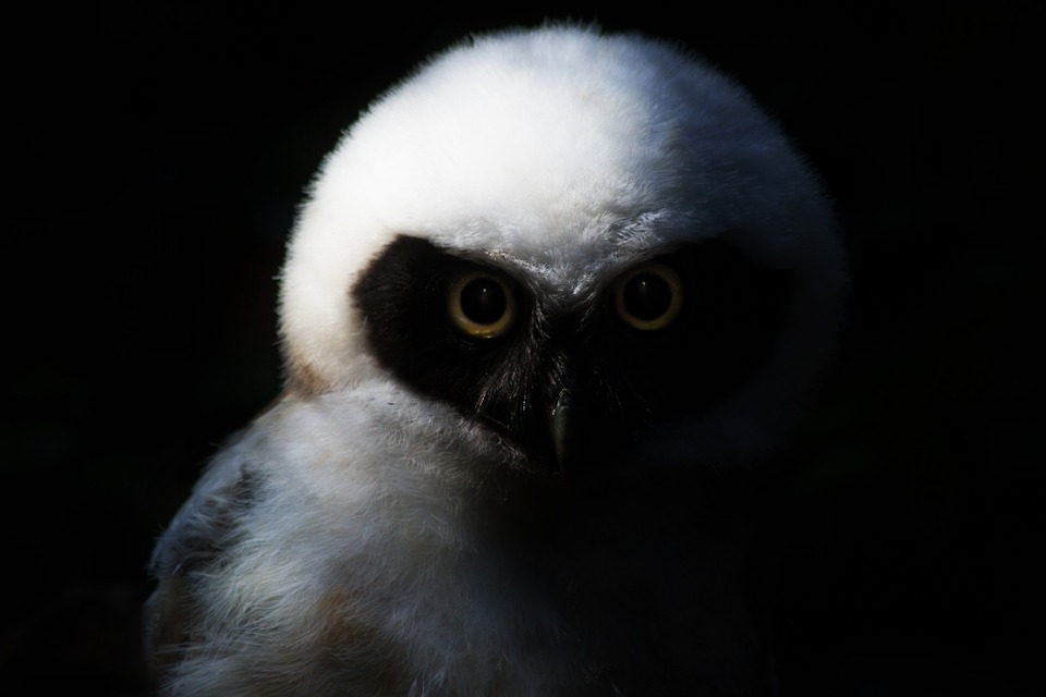owldark - Find out who is who at the Scottish Owl Centre. [A Thing To Do Tomorrow]