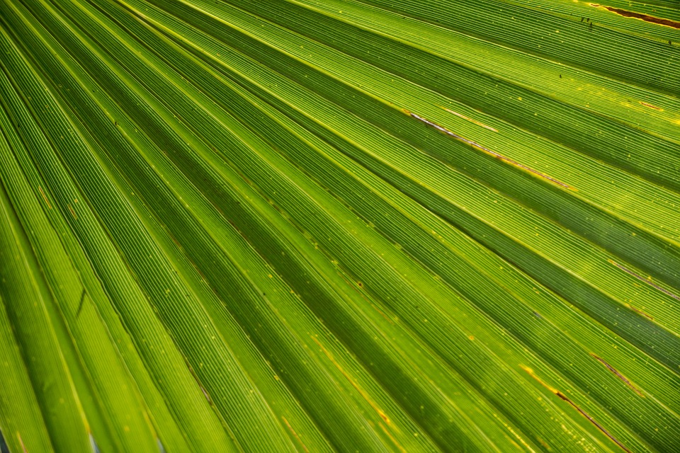 palmleaf - Warm up in the Garfield's Palm House. [ATTDT]