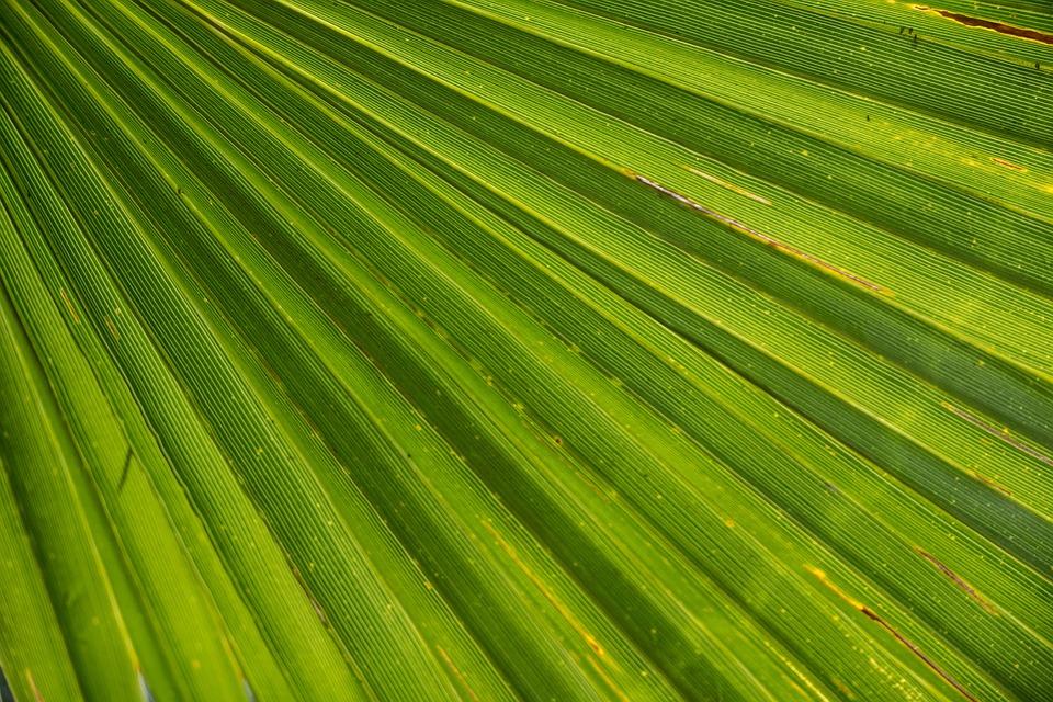 palmleaf - Warm up in the tropics of Milwaukee. [ATTDT]