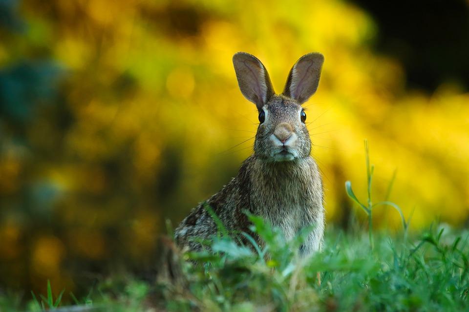 rabbitstare - Say
