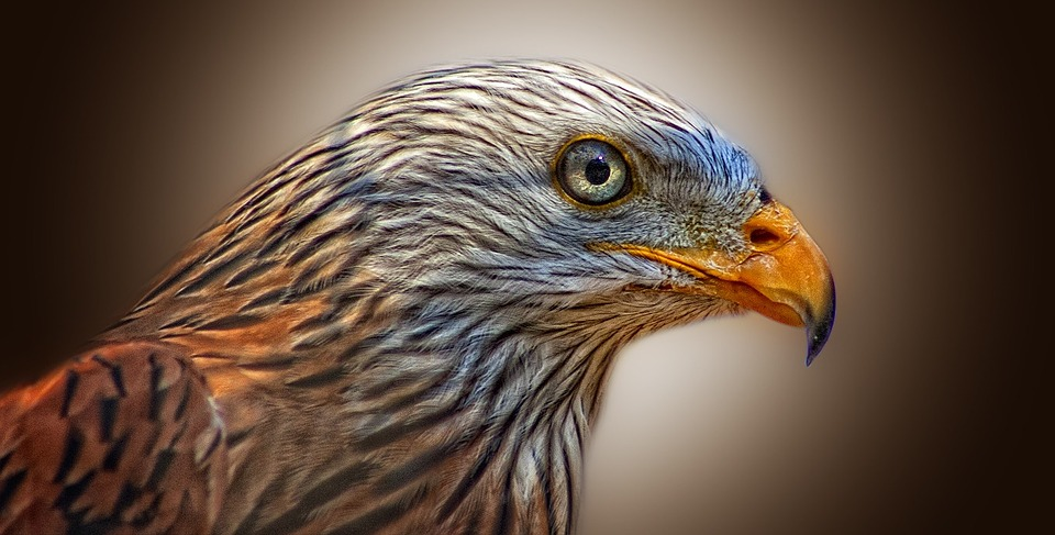 redkite - Discover a kite display in the Beacons. [ATTDT]