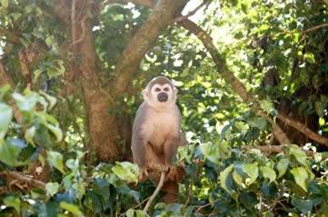 spidermonkey - Visit the island of spider monkeys. [ATTDT]
