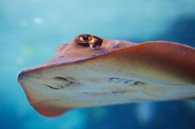 stingray - Have lunch with rays at the Blue Reef Aquarium. [ATTDT]