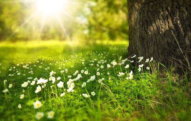 sunforestplants - Discover the symphonic sound of spring. [ATTDT]